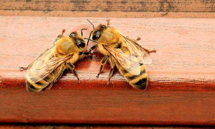 Ogniska zgnilca amerykańskiego w Małopolsce | Portal pszczelarski pszczoly.eu