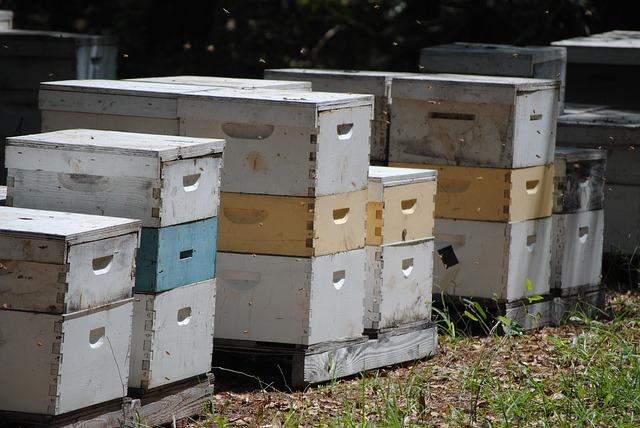 Choroby pszczół: zgnilec amerykański (złośliwy)