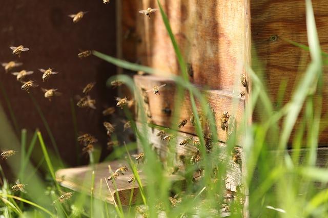 Mieszkańcy zdecydują, czy w Sopocie powstanie hotel dla pszczół
