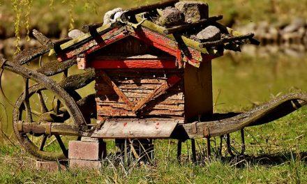 W Nysie powstanie muzeum pszczelarstwa i szkółka roślin miododajnych