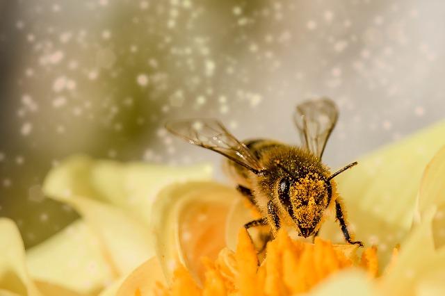 20 maja obchodzimy I Światowy Dzień Pszczół. Lubin będzie świętował w ZOO i kinie