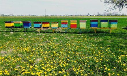 W Niemczech wystartowała platforma łącząca rolników i pszczelarzy