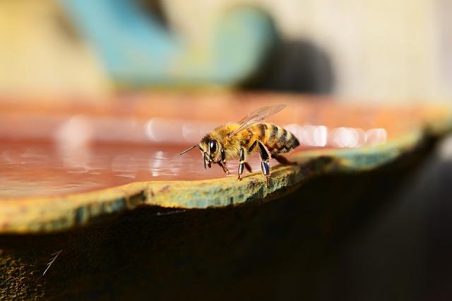 Polacy wymyślili papier ratujący pszczoły | Pszczoly.eu