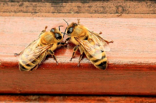 Wyniki badań: neonikotynoidy szkodzą pszczołom | Pszczoly.eu