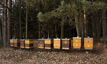 Ozonowanie – skuteczna broń na warrozę? | Portal pszczelarski