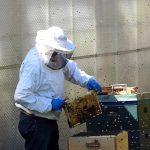Pszczelarz Roku 2019 – zgłoszenia do konkursu   Pszczoly.eu