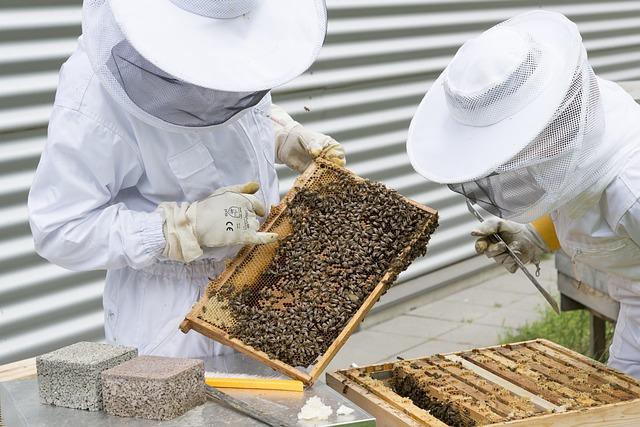 Copa-Cogeca stworzyła plan działania w celu ratowania pszczelarstwa | Pszczoly.eu