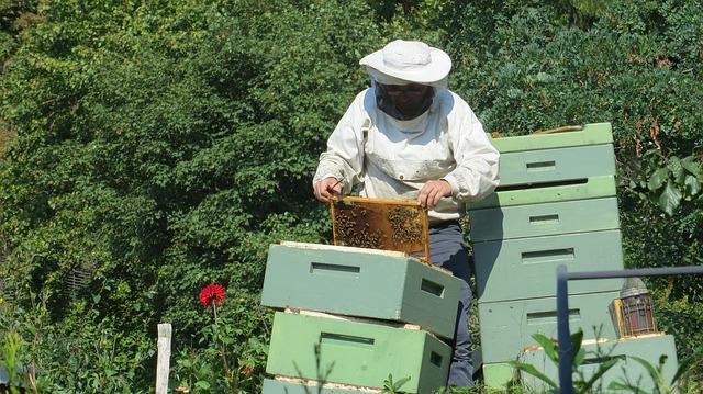 Dbajmy o pszczoły – konferencja pszczelarska w Sochaczewie | Pszczoly.eu
