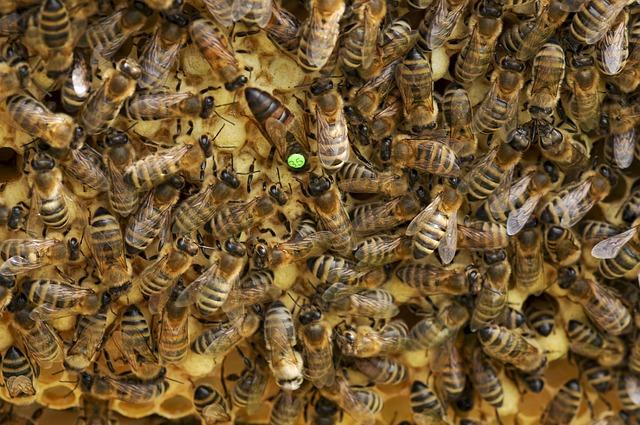 Wiemy jakie są przyczyny śpiączki u matek pszczelich