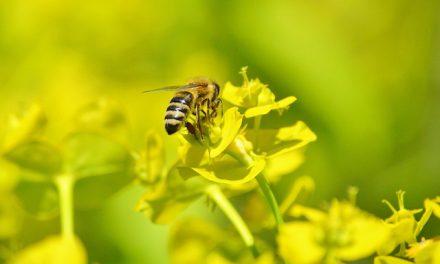 Pszczoły i miód – piknik pszczelarski w Olsztynie | Pszczoly.eu