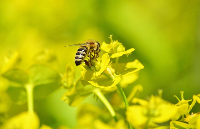 Bawarczycy pokazali światu jak walczyć o ochronę pszczół | Pszczoly.eu