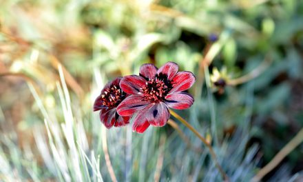 Chcesz pomóc pszczołom? Posadź cebulki kwiatów w październiku | Portal pszczoly.eu