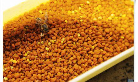 Pyłek kwiatowy (pyłek pszczeli)