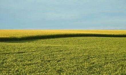 Pszczelarze zdecydują o utworzeniu strefy upraw GMO | Pszczoly.eu