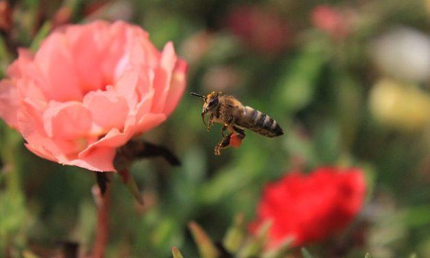 W przyszłym roku będziesz mógł wcielić się w pszczołę. Powstaje gra Bee Simulator