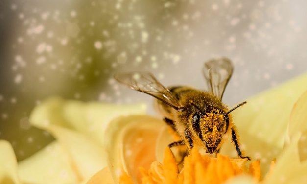 Jad pszczeli hamuje rozwój raka piersi | Pszczoly.eu
