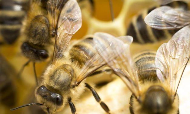 Wiosenne podkarmianie pszczół | Pszczoly.eu
