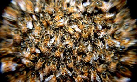 Aż trudno uwierzyć. Dzieci zabiły pół miliona pszczół | Pszczoly.eu