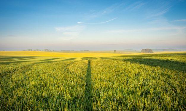 Greenpeace alarmuje: nowy minister rolnictwa wydał pozwolenie na stosowanie neonikotynoidów!