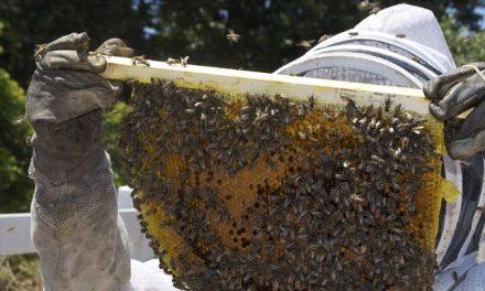 Piknik Pszczelarski w Gorzowie Wielkopolskim | Pszczoly.eu