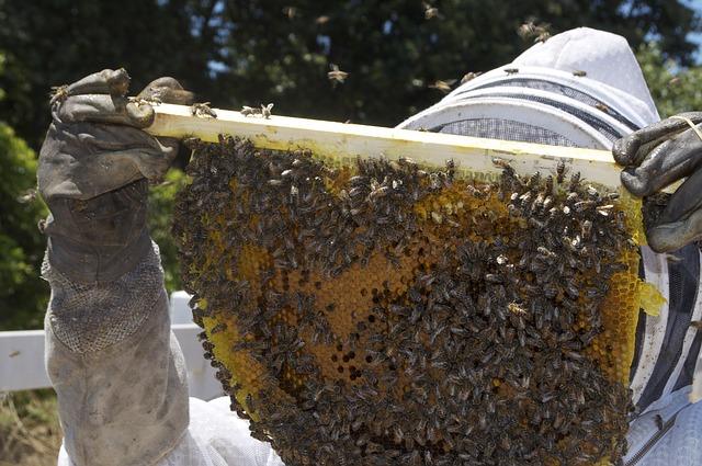 V Forum pszczelarskie w Stalowej Woli – zapisy tylko do piątku 24 sierpnia | Pszczoly.eu