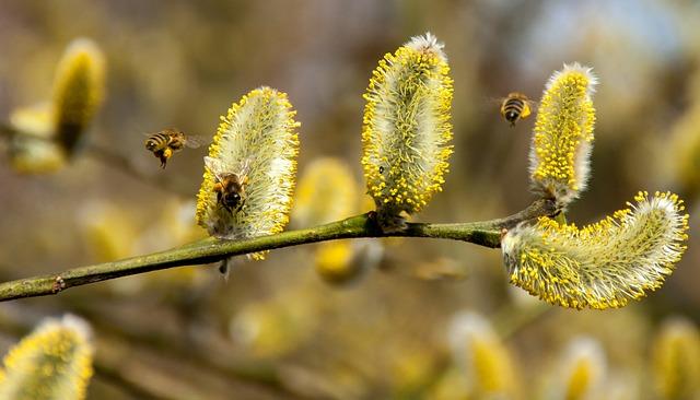 Chore pszczoły wybierają lepszy jakościowo pokarm | Pszczoly.eu