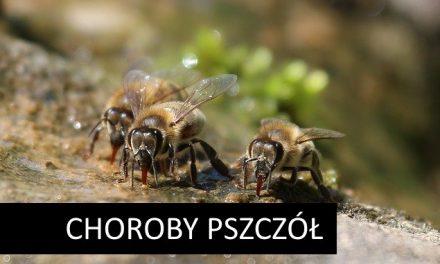 W tym roku pojawi się nowy polski lek na nosemozę! | www.pszczoly.eu
