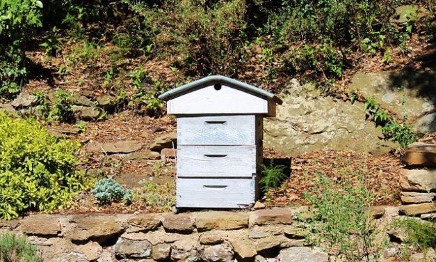 Gehenna pszczelarzy w walce z mordercami pszczół | Pszczoly.eu