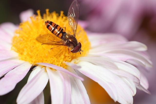 Pszczoły wykorzystywane do przenoszenia środków ochrony roślin | Pszczoly.eu