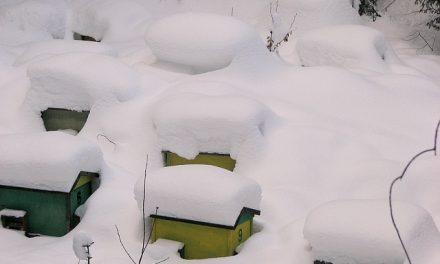 Wandale zabili pszczoły w Wodnicy koło Ustki | Pszczoly.eu