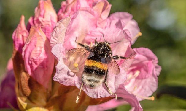 Tajemnice pyłków – niezwykła wystawa w Łodzi! | Pszczoly.eu