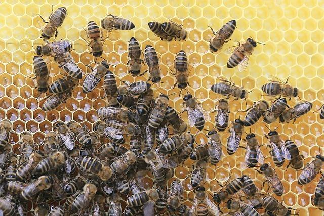 Piknik pszczelarski w Parku Etnograficznym w Tokarni | Pszczoly.eu