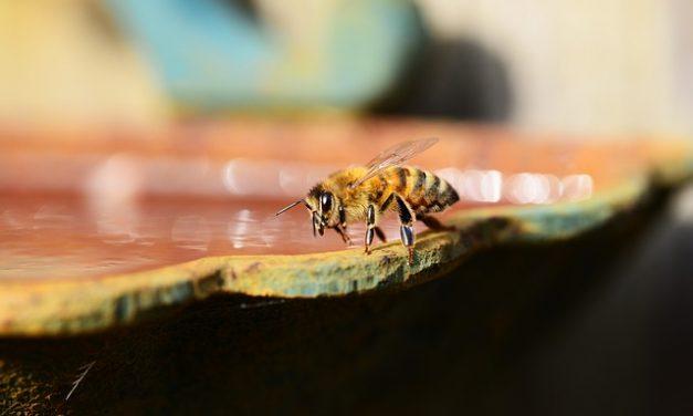 Polacy wymyślili papier ratujący pszczoły   Pszczoly.eu