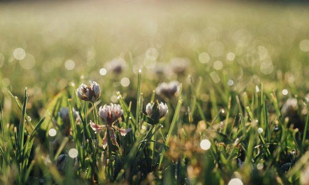 Dr Michał Filipiak: larwy, aby przeżyć, potrzebują wysokiej jakości pyłku | Pszczoly.eu