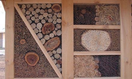 """W ramach akcji """"Nie żądlę – zapylam"""" na terenie UŚ stanął hotel dla pszczół"""