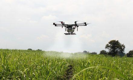 Namierzają dronami i okradają. Złodzieje pasiek coraz sprytniejsi! | Pszczoly.eu