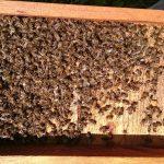 Kolejne informacje w sprawie wytrucia pszczół w pasiece Rafała Szeli | Pszczoly.eu