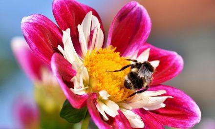Drastyczny spadek populacji owadów latających. Aż o 3/4 w ciągu niespełna 30 lat | Pszczoly.eu