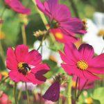 Rekordowa liczba gmin przyjaznych pszczołom   Pszczoly.eu