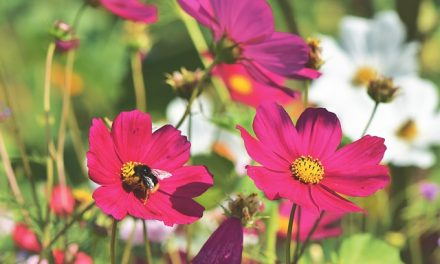 W Gogolinie powstaje pierwsza łąka kwietna | Pszczoly.eu