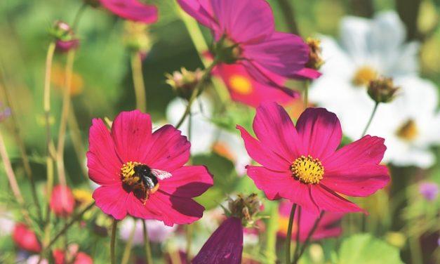 Rekordowa liczba gmin przyjaznych pszczołom | Pszczoly.eu