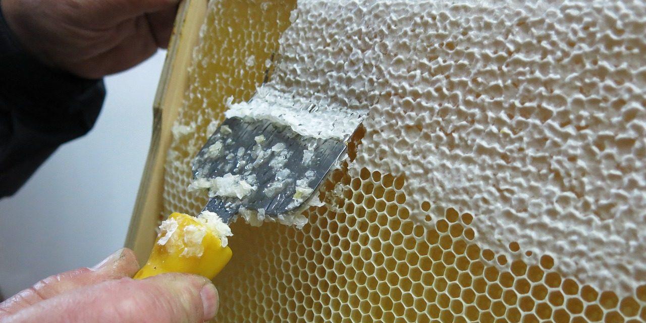 Wosk pszczeli | Portal pszczelarski – pszczoly.eu