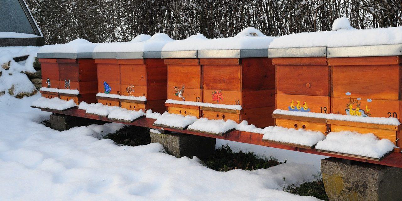Zimowy konkurs fotograficzny na zdjęcie… z pszczołą | Pszczola.eu