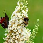 Konferencja online – Znaczenie pasów kwietnych w rolnictwie – zapisz się