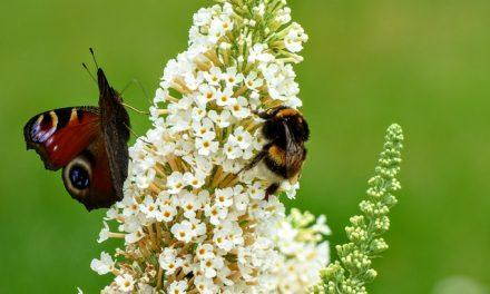 Owady giną szybciej niż inne zwierzęta. Za 100 lat może ich nie być wcale! | Pszczoly.eu