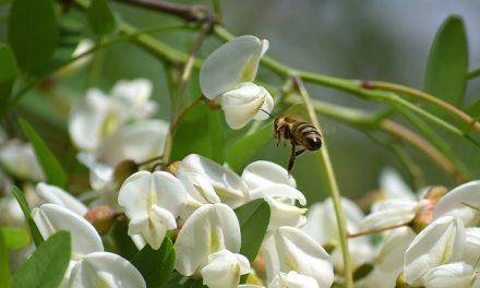 """""""Małopolska pszczoła"""" – ostatni tydzień na składanie wniosków"""