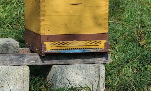 Skradziono ule z rodzinami w pasiece w miejscowości Leśniczówka | Pszczoly.eu