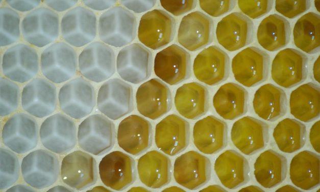 Na UMCS stworzono innowacyjny analizator wosku | Pszczoly.eu