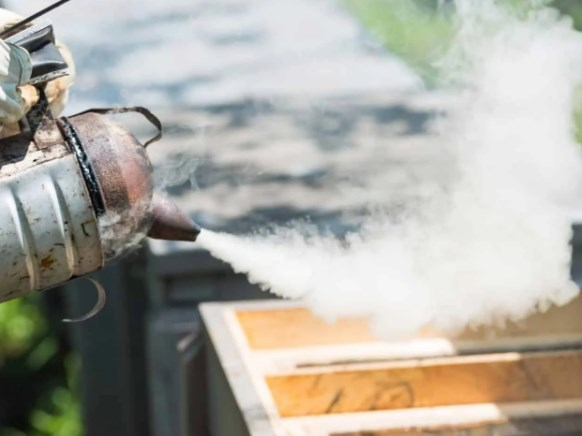 Dlaczego dym uspokaja pszczoły?